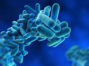 Legionella risk assessment for landlords - close-up of cells